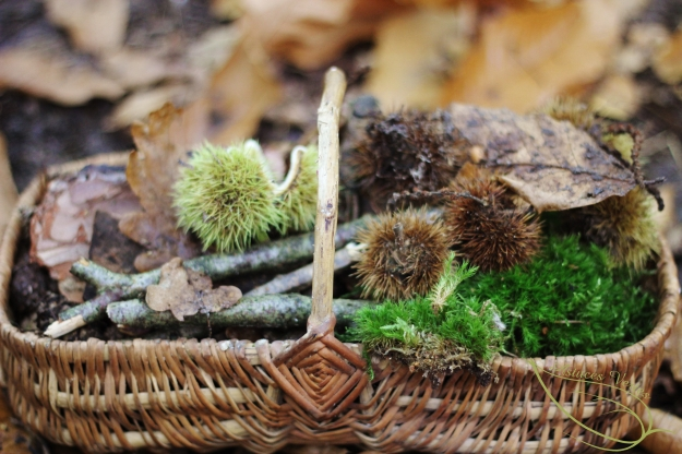 balade nature en automne, glanage
