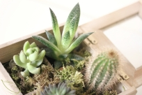 succulentes terrarium diy