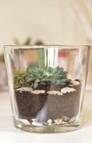 Fabriquer un terrarium diy pour plantes grasses type succulentes