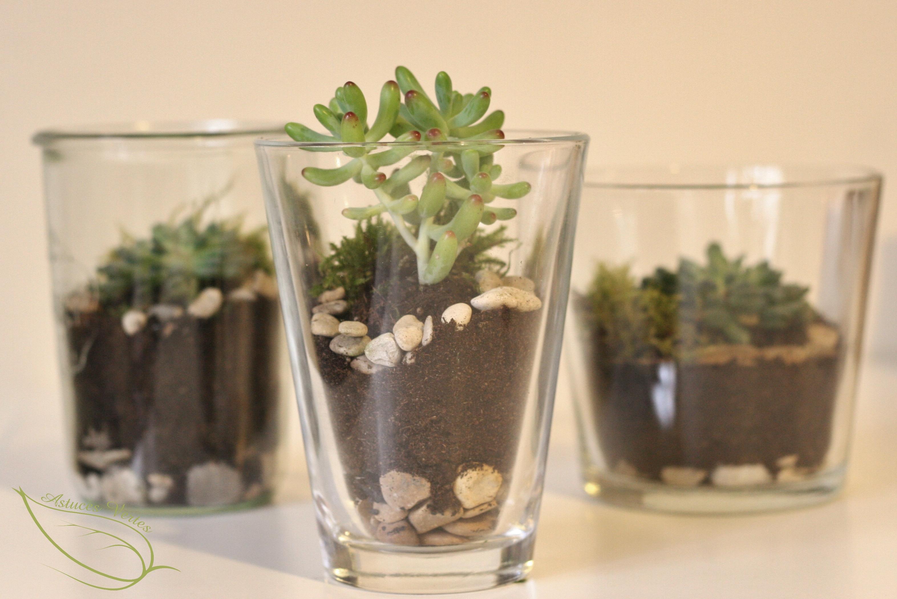 fabriquer un terrarium diy pour plantes grasses type. Black Bedroom Furniture Sets. Home Design Ideas