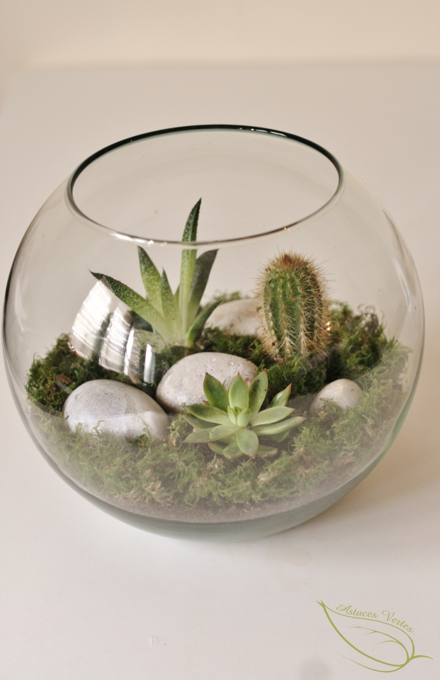 un terrarium diy pour plantes grasses type succulentes. Black Bedroom Furniture Sets. Home Design Ideas