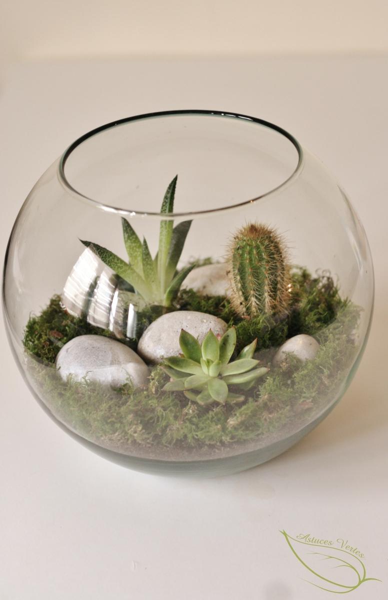 Comment Faire Un Terrarium Plante Grasse un terrarium diy pour plantes grasses type succulentes